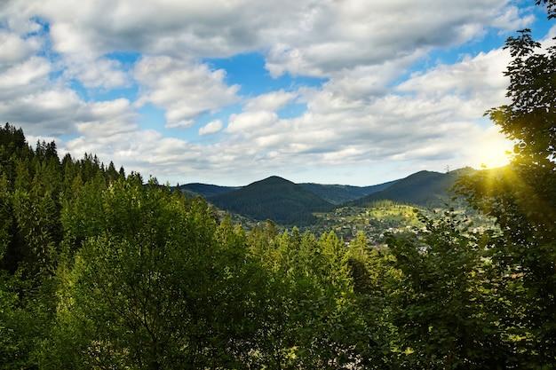 Forêt feuillue verte et montagnes de karpaty, ukraine