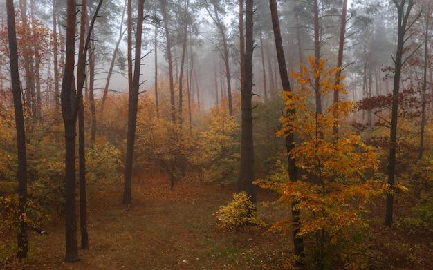 Forêt de feuillus d'automne brumeux. belle forêt dense colorée tôt le matin