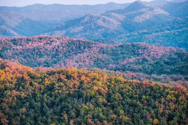 Forêt de feuillus colorés en automne avec feuillage multicolore jaune, orange et vert sur les arbres dans une vue panoramique plein cadre des saisons changeantes.