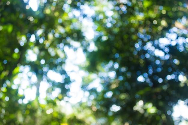 Forêt de flou abstrait avec fond de soleil bokeh.