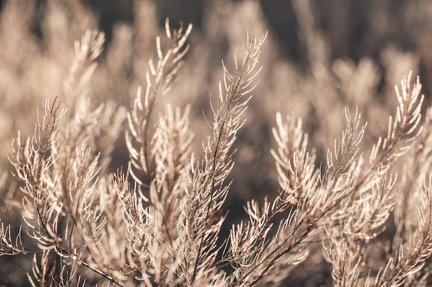 Forêt fraîche d'herbe en gouttes de rosée du matin étincelante au soleil