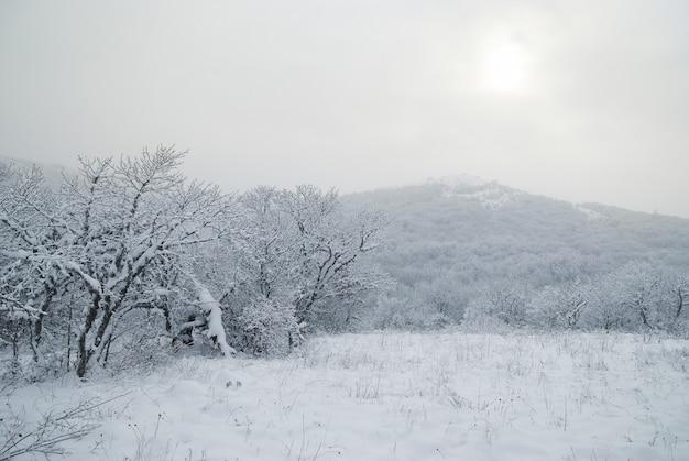 Forêt glacée d'hiver avec de beaux arbres