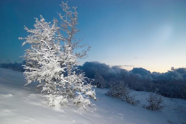 Forêt glacée d'hiver dans la nuit.