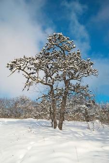 Forêt glacée d'hiver