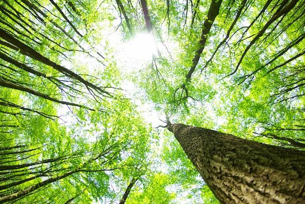 Forêt avec de grands arbres