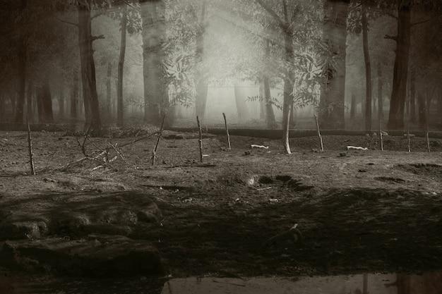 Forêt hantée avec brouillard et scène dramatique