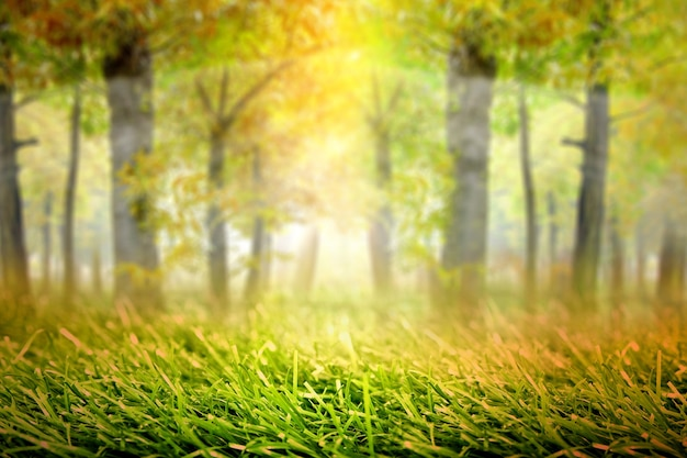 Forêt hantée avec fond de brouillard et de soleil. concept d'halloween