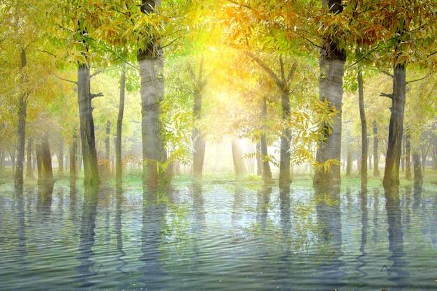 Forêt hantée avec lac et soleil