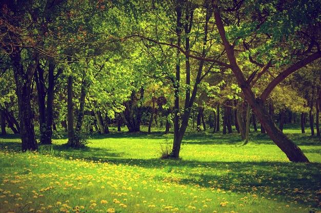 Forêt avec de l'herbe