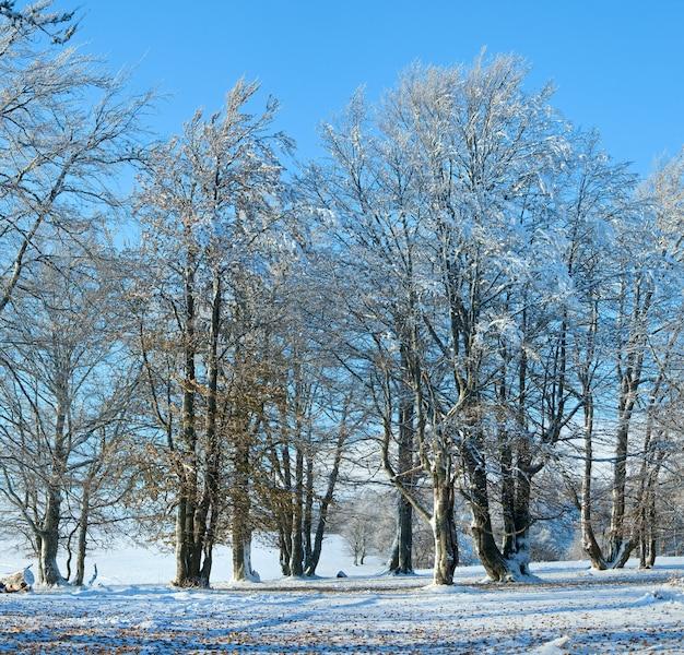 Forêt de hêtres de montagne d'octobre avec la première neige d'hiver et les dernières feuilles d'automne. deux clichés piquent l'image.