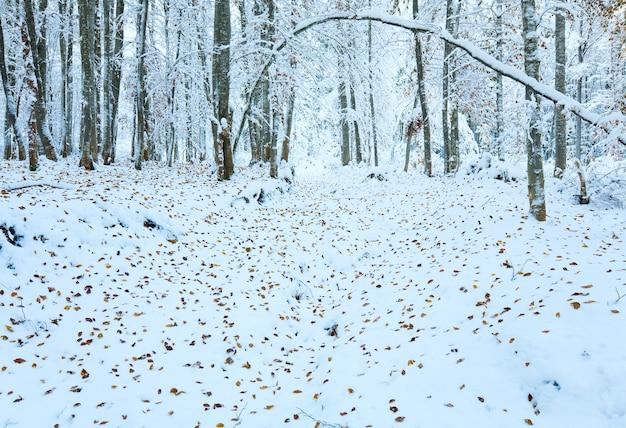 Forêt de hêtres de montagne d'octobre avec la première neige d'hiver et les dernières feuilles d'automne.