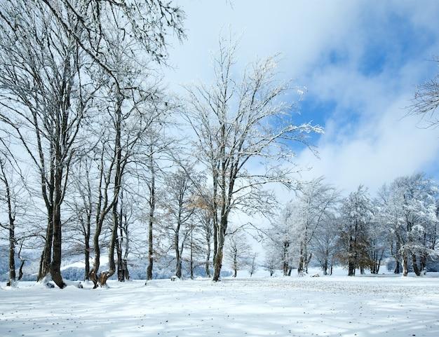 Forêt de hêtres de montagne d'octobre avec la première neige d'hiver et les dernières feuilles d'automne