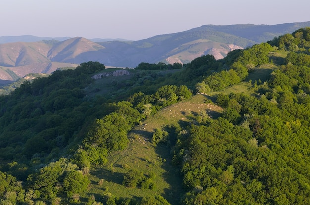 Forêt de hêtres verts sur les collines. paysage d'été dans les montagnes. soirée ensoleillée