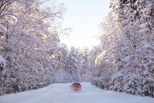 Forêt d'hiver après une journée ensoleillée de neige arbres dans la neige