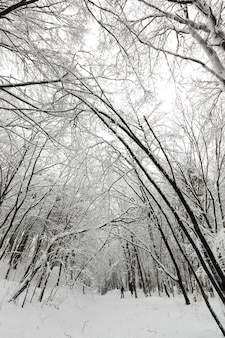 Forêt d'hiver avec des arbres couverts de neige blanche