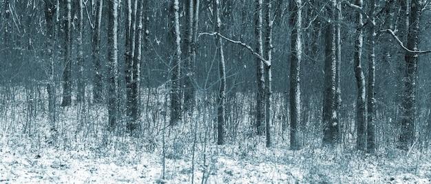 Forêt d'hiver avec des arbres couverts de neige un jour nuageux