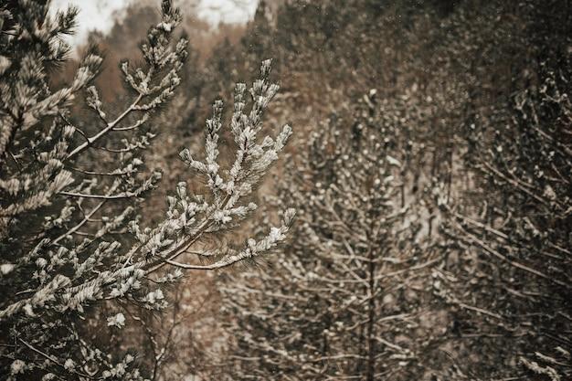 Forêt d'hiver avec des arbres couverts de neige