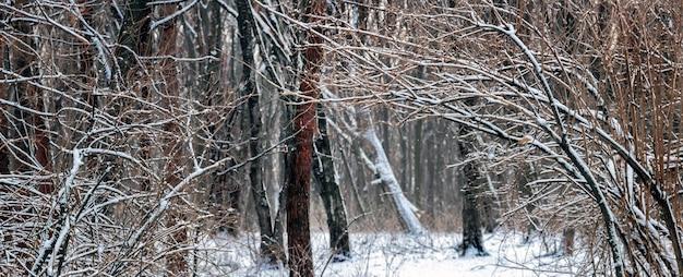 Forêt d'hiver avec des arbres enneigés, route dans la forêt d'hiver