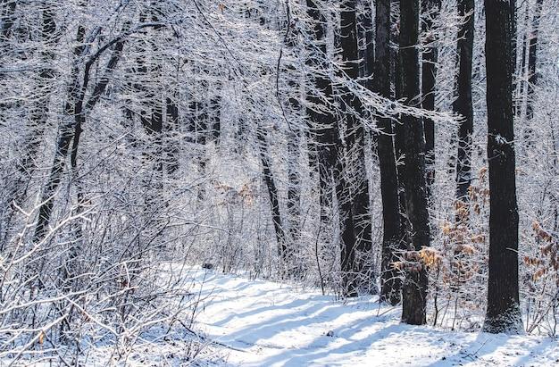 Forêt d'hiver avec arbres enneigés et route par une journée ensoleillée