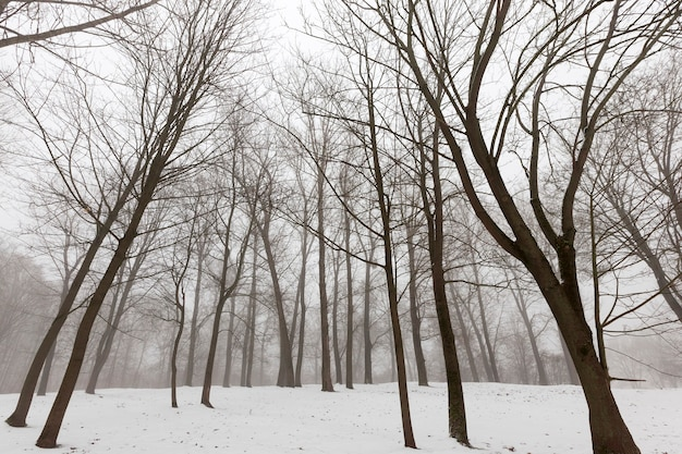 Forêt d'hiver avec des arbres à feuilles caduques nus dans la brume diurne et la brume peut être vue au loin