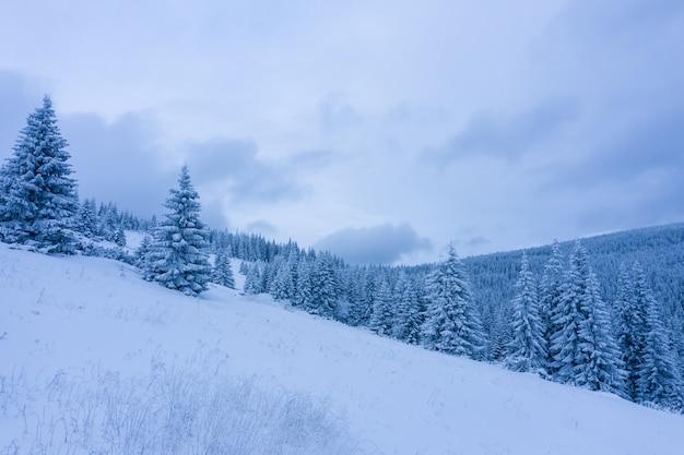 Forêt d'hiver avec des arbres givrés, vue aérienne / vue aérienne par drone des bois enneigés /