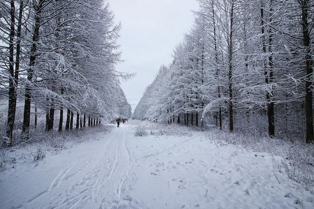 Forêt d'hiver couverte de neige