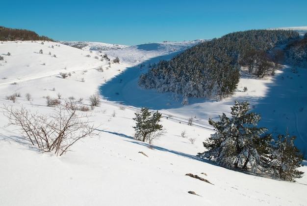 Forêt d'hiver dans les montagnes avec de la neige blanche sur les arbres