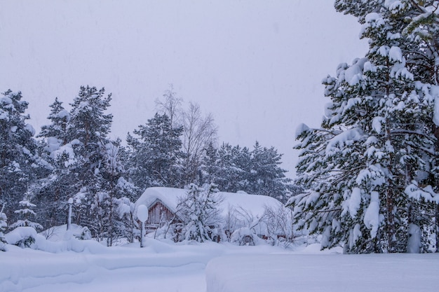 Forêt d'hiver du soir. petite maison dans les profondeurs. tout est inondé de neige. chute de neige