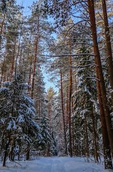 Forêt d'hiver enneigée dans une journée ensoleillée chemin de neige blanche arbres enneigés sur fond de ciel bleu