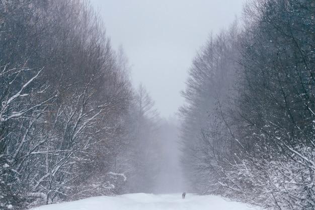 Forêt d'hiver fabuleux conte de fées magique. beau paysage de nature sauvage d'hiver pittoresque.