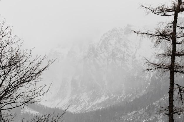 Forêt d'hiver et montagnes