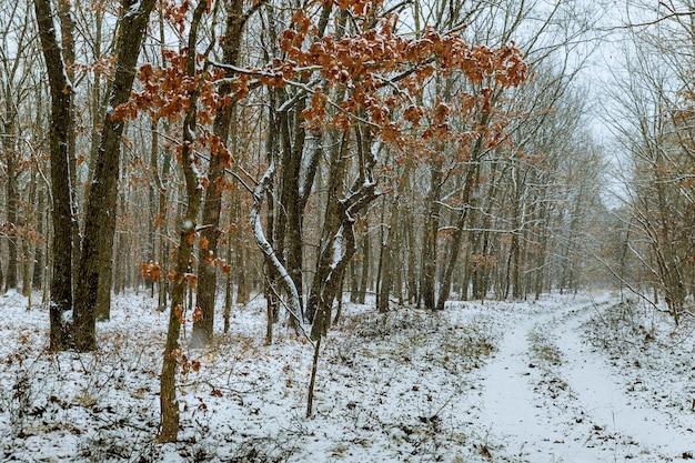 Forêt d'hiver avec de la neige sur les arbres et le sol