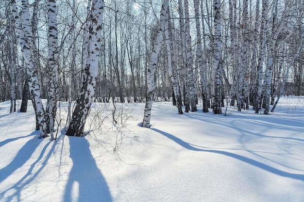 Forêt d'hiver par une journée ensoleillée