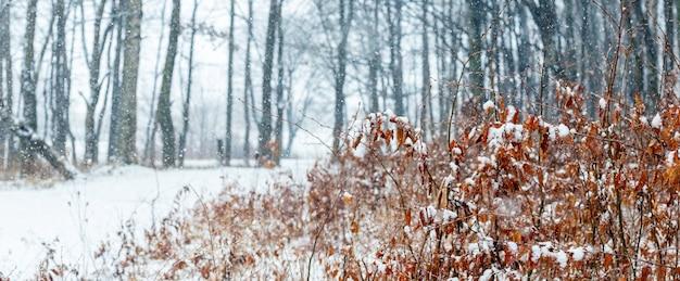 Forêt en hiver pendant un blizzard, panorama. paysage d'hiver