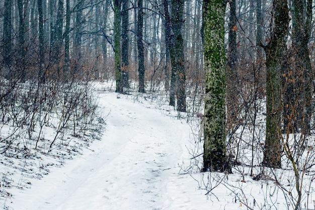 Forêt d'hiver avec une route enneigée entre les arbres