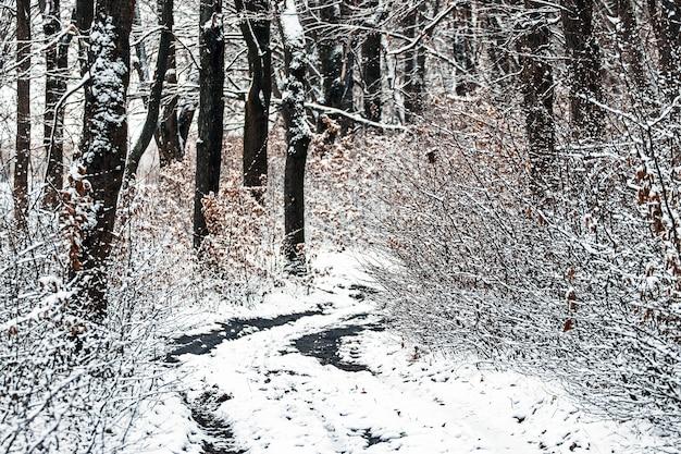 Forêt d'hiver avec une route parmi les arbres enneigés