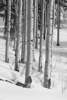 Forêt d'hiver à vail, colorado