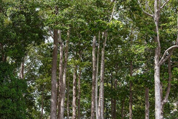 Forêt d'hiver verte.