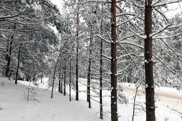 Forêt d'hiver