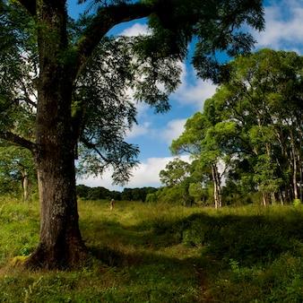 Forêt, île de santa cruz, îles galapagos, équateur