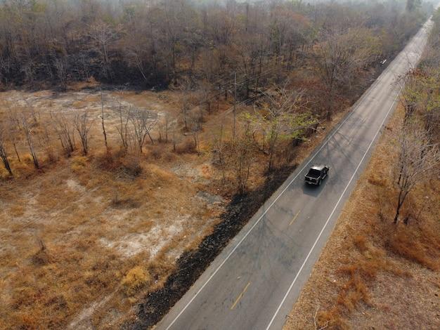 Forêt jaune aride, la route dans la forêt était remplie d'arbres noircis par les incendies de forêt.