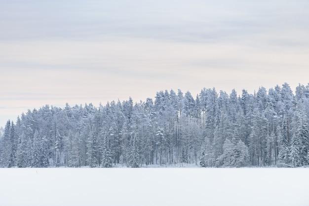 La forêt sur le lac de glace s'est recouverte de neige épaisse et de ciel en hiver à la laponie, en finlande.