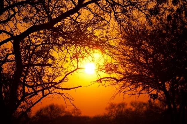 Forêt lever du soleil