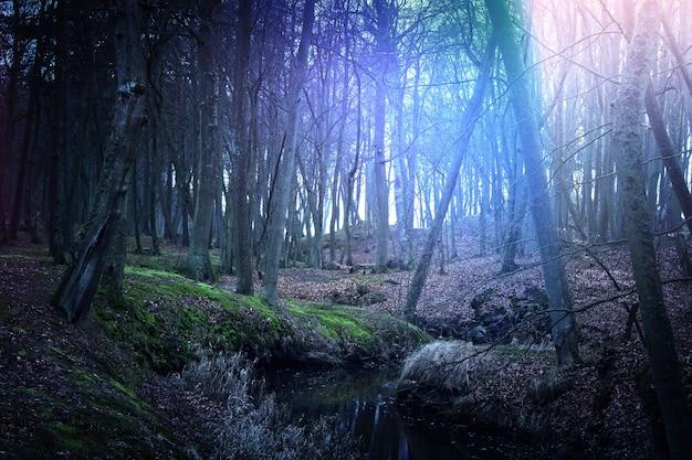 Forêt magique sombre et mystérieuse.
