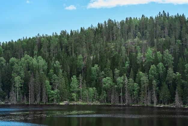 Forêt majestueuse et rivière pittoresque environnement pittoresque du nord carélie