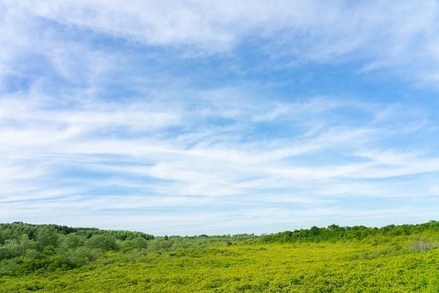 Forêt de mangroves (ceriops decandra) aussi connue sous le nom de «golden meadow prong»
