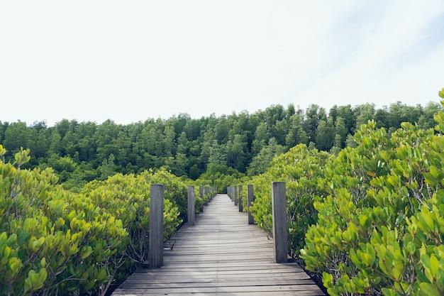 Forêt de mangroves (ceriops decandra) aussi connue sous le nom de prairie doré
