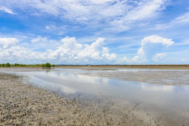 Forêt de mangroves dans la réserve naturelle et forestklaeng à prasae, province de rayong, thaïlande