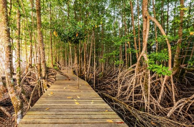 Forêt de mangroves et lumière du matin