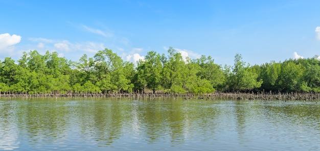 Forêt de mangroves et ostréiculture dans le parc national de la baie de phang nga, thaïlande